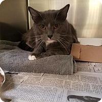 Adopt A Pet :: Brody - Philadelphia, PA