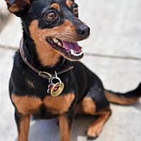 Adopt A Pet :: Joey - Long Beach, CA