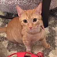 Adopt A Pet :: Marmalade - Birmingham, AL