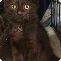 Adopt A Pet :: Mikey - East Brunswick, NJ