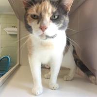 Adopt A Pet :: Priscilla - Cumming, GA