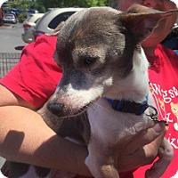 Adopt A Pet :: Horatio - Chico, CA