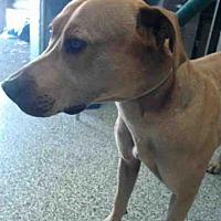 Adopt A Pet :: BRUNO - San Bernardino, CA