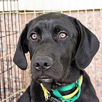 Adopt A Pet :: Chett - Richmond, VA