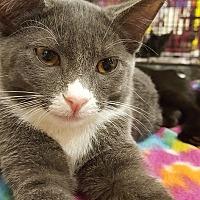 Adopt A Pet :: Pinkie Pie - Bensalem, PA