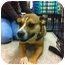 Photo 2 - Beagle/Terrier (Unknown Type, Small) Mix Dog for adoption in Blanchard, Oklahoma - Cindy