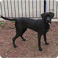 Adopt A Pet :: Remy - Toronto/Etobicoke/GTA, ON