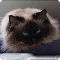 Adopt A Pet :: Sookie - Keizer, OR