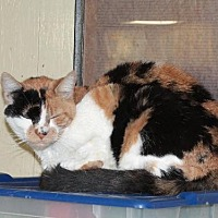 Adopt A Pet :: Patches - Golden Valley, AZ