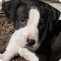 Adopt A Pet :: Turbo - Austin, TX