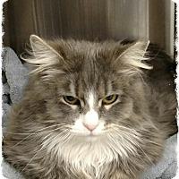 Adopt A Pet :: Liska - Pueblo West, CO