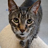 Adopt A Pet :: Stoney - Michigan City, IN