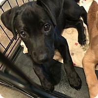 Adopt A Pet :: Lakely - Huntsville, AL