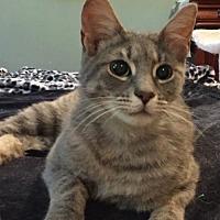 Adopt A Pet :: Mochi - McKinney, TX