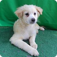 Adopt A Pet :: Jessie - San Diego, CA