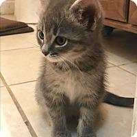 Adopt A Pet :: Rose - Staten Island, NY