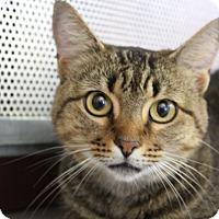 Adopt A Pet :: Jasmine - Sarasota, FL