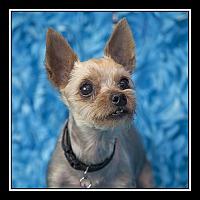Adopt A Pet :: Jojo - San Diego, CA