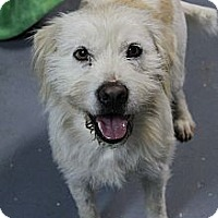 Adopt A Pet :: Fred Astaire - Wytheville, VA