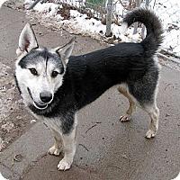 Adopt A Pet :: WILLY - Seattle, WA