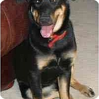 Adopt A Pet :: Pumpkin - Gilbert, AZ