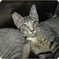 Adopt A Pet :: Alicia - Modesto, CA