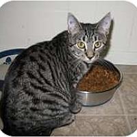 Adopt A Pet :: Delorian - Shelton, WA