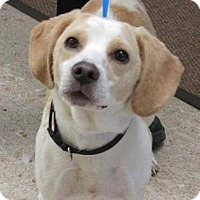 Adopt A Pet :: Heidi - North Olmsted, OH