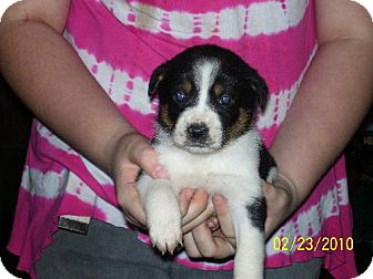Shepherd (Unknown Type) Mix Puppy for adoption in Grand Saline, Texas - Candy