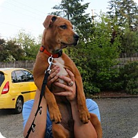 Adopt A Pet :: Mogli - Eugene, OR