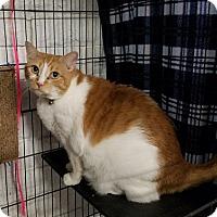 Adopt A Pet :: MiaoMiao - Phoenix, AZ