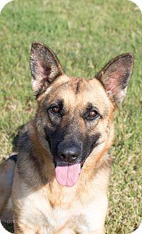German Shepherd Dog Mix Dog for adoption in Walnut Creek, California - Annabella