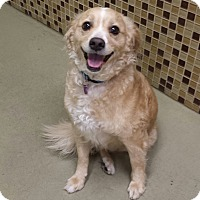Adopt A Pet :: Teddy - Encino, CA