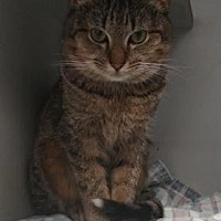 Adopt A Pet :: Taz - Ashtabula, OH