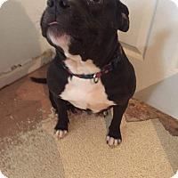 Adopt A Pet :: Amber - Weatherford, TX