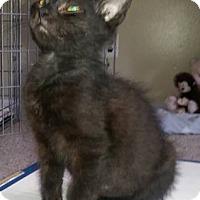 Adopt A Pet :: Cole - Trenton, NJ