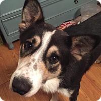 Adopt A Pet :: Balto - San Antonio, TX