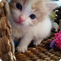 Adopt A Pet :: Chewy - Turnersville, NJ