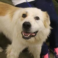 Adopt A Pet :: Sargent - Waco, TX