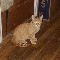 Adopt A Pet :: Simba - New City, NY
