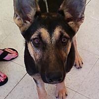 Adopt A Pet :: Molly - Midlothian, VA