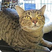 Adopt A Pet :: Tia - Raritan, NJ