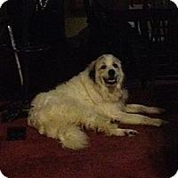 Adopt A Pet :: Sissy - Dandridge, TN