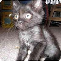 Adopt A Pet :: Little Man - Mesa, AZ