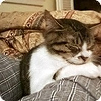 Adopt A Pet :: Sally Field - Vancouver, BC