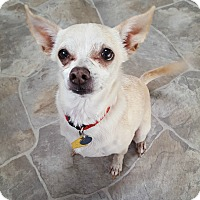 Adopt A Pet :: Mina - Fennville, MI