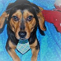 Adopt A Pet :: B.J. - Waupaca, WI