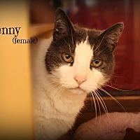 Adopt A Pet :: Penny - Springfield, PA