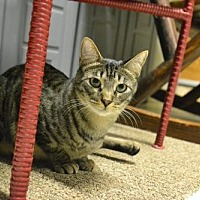 Adopt A Pet :: Rico - Land O Lakes, FL
