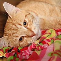 Adopt A Pet :: Moses (Neutered) - Marietta, OH